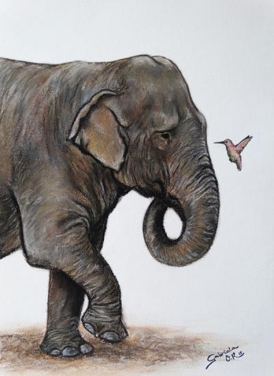 elefante_2015_gabrieladelolmo