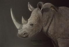 rinoceronte gabriela del olmo animal portrait artist marca