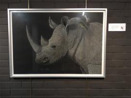 Exposicion_de_pintura_mas_que_animales_hiperrealismo_gabriela_del_olmo_pilar_miro_14