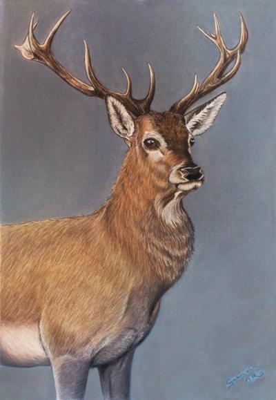 ciervo_gabriela_del_olmo_animal_portrait_artist_hiperrealismo