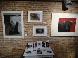 exposicion-feeding-art-madrid-malasana-gabriela-del-olmo-animal-portrait-artist-3