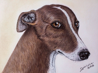 galgo_gabriela_del_olmo_animal_portrait_artist_hiperrealismo