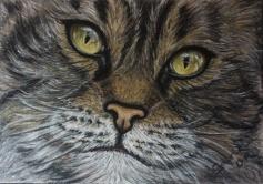 gato_montes_gabriela_del_olmo_animal_portrait_artist_hiperrealismo
