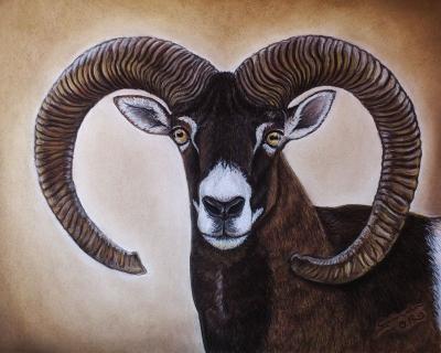 muflon__Gabriela-del-Olmo_Animal-Portrait-Artist