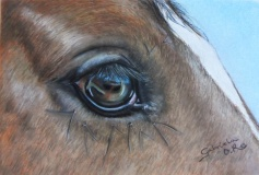 ojo-equino-Gabriela-del-Olmo-Animal-Portrait-Artist