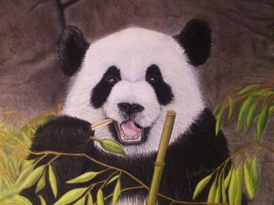 panda_Gabriela-del-Olmo_Animal-Portrait-Artist