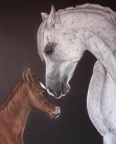potra-arabe-y-yegua-arabe_gabriela_del_olmo_animal_portrait_artist_hiperrealismo