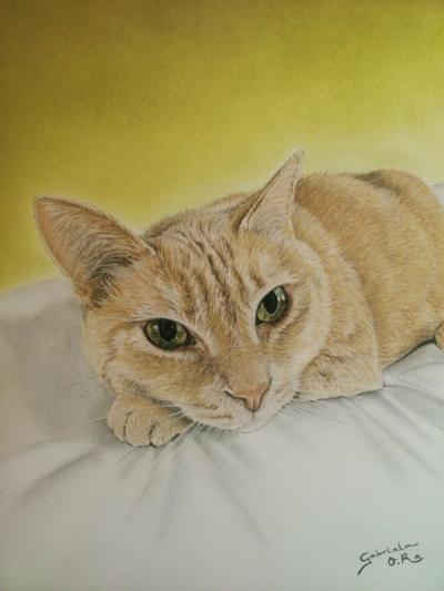 retrato trece gato