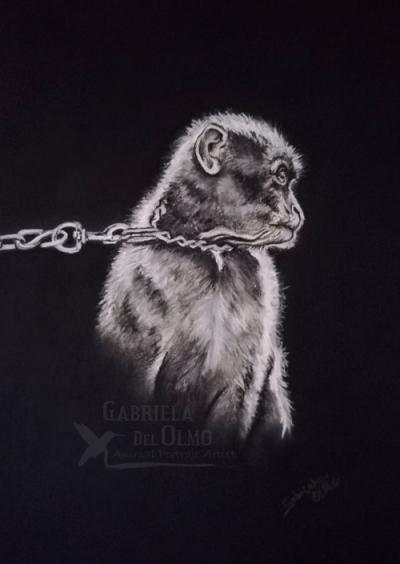 resolucion-baja-mono_encadenado_no_maltrato_animales_justicia_gabriela_del_olmo_animal_portrat_artist_pintora_animalista_madrid-copyright