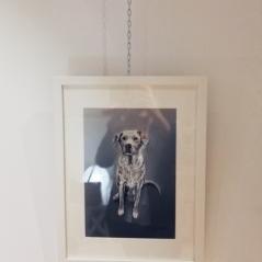gabriela_del_olmo_herbolario_sol_de_invierno_animal_portrait_artist_mascotas_retratos_perros_productos_naturales_animales_madrid-6