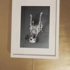 gabriela_del_olmo_herbolario_sol_de_invierno_animal_portrait_artist_mascotas_retratos_perros_productos_naturales_animales_madrid-retratoar-mi-perro-pintura-cuadrp