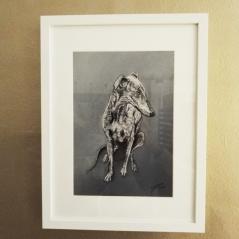gabriela_del_olmo_herbolario_sol_de_invierno_animal_portrait_artist_mascotas_retratos_perros_productos_naturales_animales_madrid_galgo