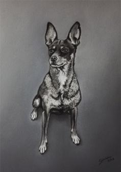 web-oli_gabriela-del-olmo-retratos-perros-mascotas-cuadros-animales-pintura-animalista-arte-animal-pintora-madrilena-retratar-a-mi-mascota