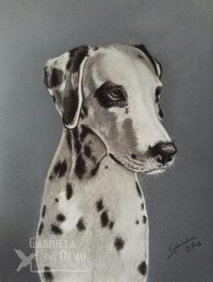 web-retrato-mascotas-perros-dalmata-gabriela-del-olmo-mireia-retratos-perro-encargo